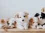 Paws for Thought campaign aims to raise awareness around illegally bred dogs - Newry news