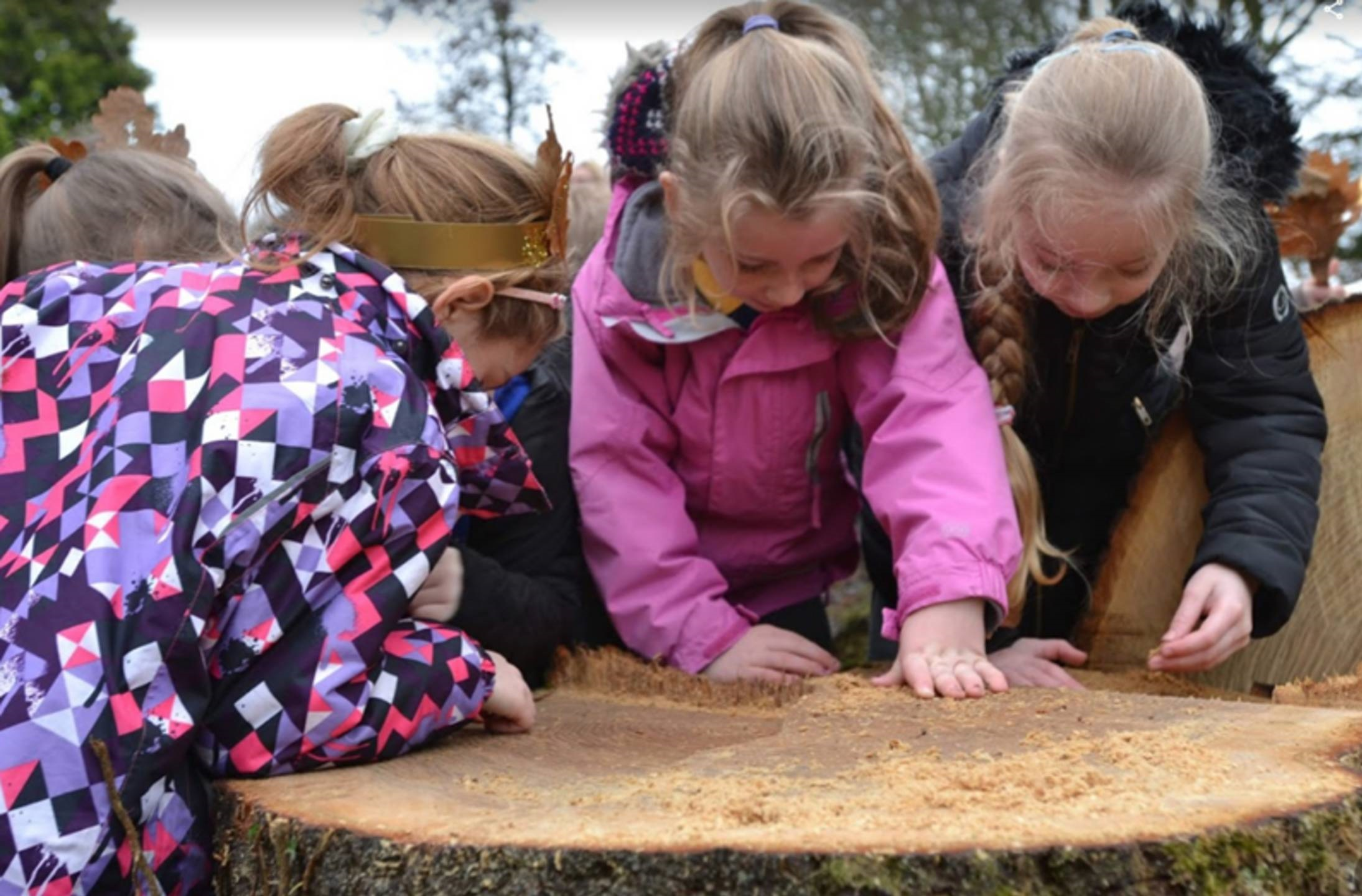 Poots announces £4 Million Small Woodland Grant Scheme in support of 'Forests for Our Future' programme - Newry Times
