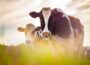 DAERA to introduce inspections for isolation of retained BVD positive animals - Newry newspapers
