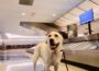 Delay to pet travel checks confirmed - Newry Times - newry news live