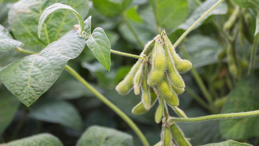 Successful pilot Protein Crops Scheme welcomed - Newry Times - newry news now