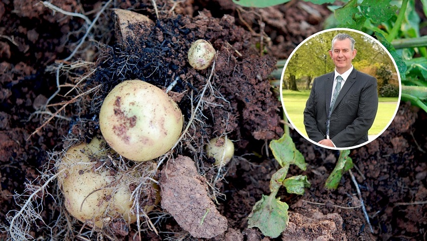 £2m Covid-19 support scheme announced for potato growers - Newry Times - newry news today