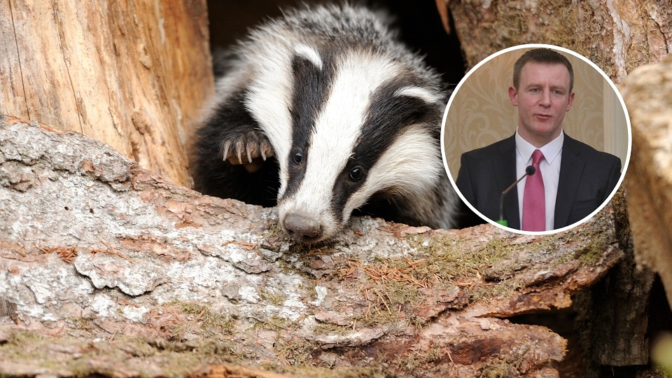 'Brutal cull of badgers should not be allowed to proceed' - Newry MLA - Newry Times - county down newspaper