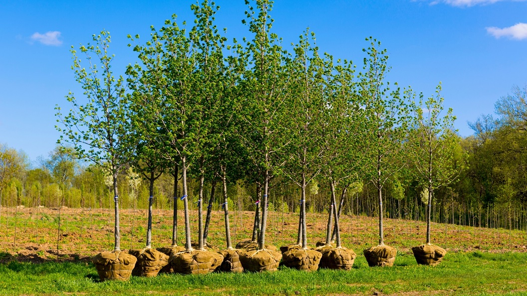 Landowners encouraged to plant trees for climate and nature - Newry Times - newry news co down