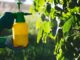 NI Water Urges Public to Use Pesticides Responsibly - Newry Times - newry news headlines